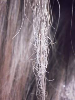 É possível recuperar um cabelo elástico?