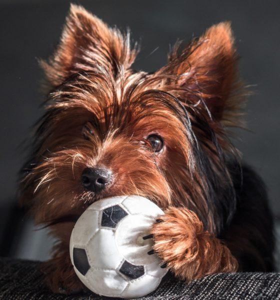 Pets: 5 dicas para manter a casa com animal limpa
